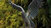 Bronzefigur Seeadler klein | Dekoration aus Bronze für Heim und Garten