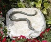 Bronzefigur Blindschleiche auf Flusskiesel Bronze Gartenfigur Skulptur Rottenecker