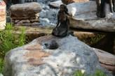 Wasserspiel kpl. SET: Quellstein Ozean Findling mit Bronzefigur inkl. Pumpe | Becken | LED