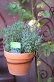 Topfhalter Edelrost | Gartenstecker Rosenstab Shabby, Landhaus, Cottage & Vintage